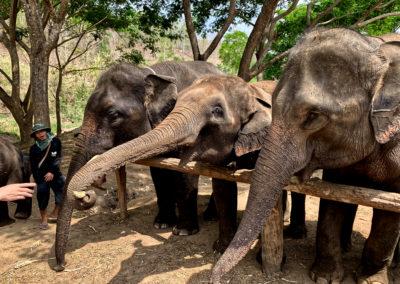 D4_05-CNX-Kershor Elephants-003