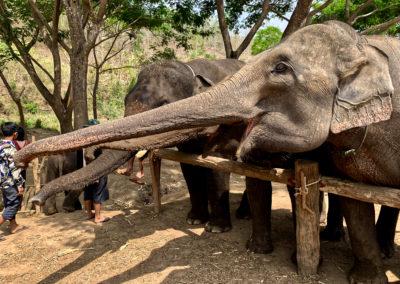 D4_06-CNX-Kershor Elephants-004