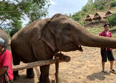 D4_07-CNX-Kershor Elephants-005