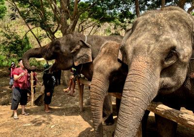 D4_08-CNX-Kershor Elephants-006