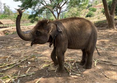 D4_09-CNX-Kershor Elephants-007