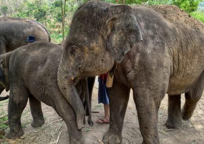 D4_12-CNX-Kershor Elephants-010