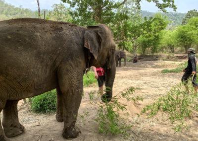 D4_13-CNX-Kershor Elephants-011
