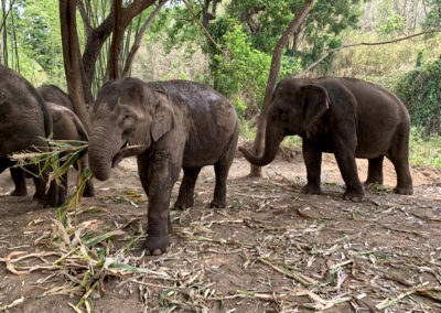 D4_17-CNX-Kershor Elephants-015