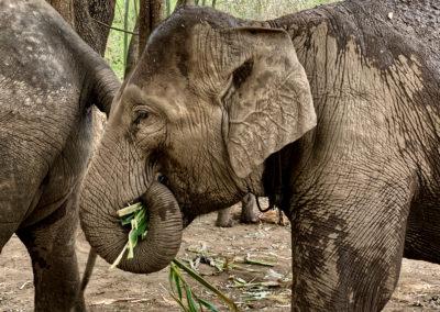 D4_18-CNX-Kershor Elephants-016