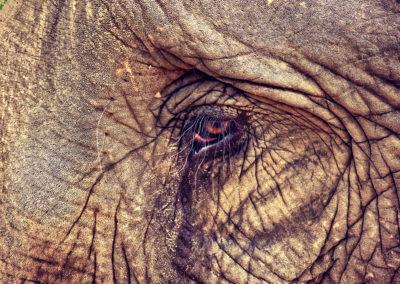 D4_19-CNX-Kershor Elephants-017